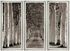 Avenue of Trees Triptych
