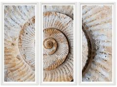 Fossil Shell Triptych