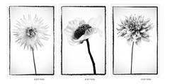 Flowers on Acrylic Glass