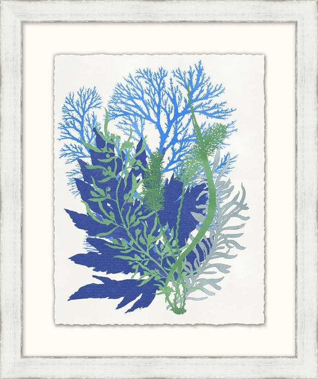 Contemporary Graphic Sea Life Prints For Sale