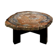 Ado Chale Rare Fossilized Wood Top Coffee Table, 1960s