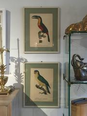 Set of 4 Barraband Parrot Prints