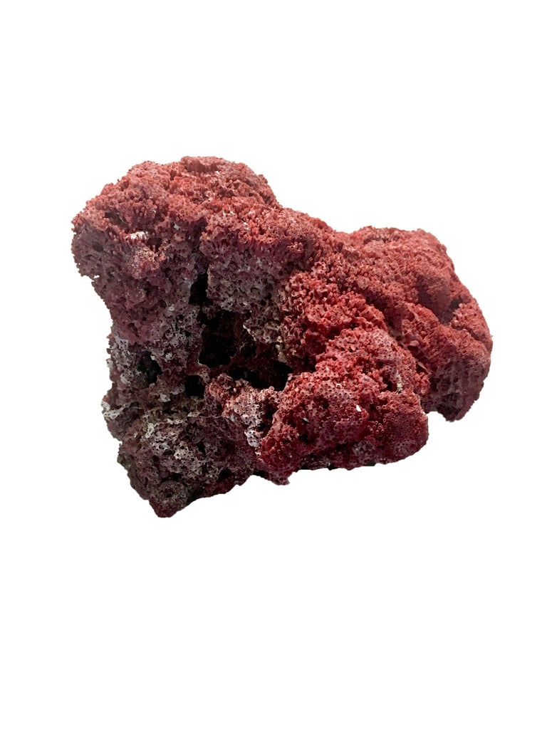 Large Red Coral Specimen For Sale 1