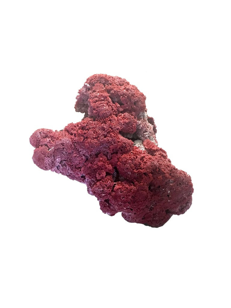 Large Red Coral Specimen For Sale 2