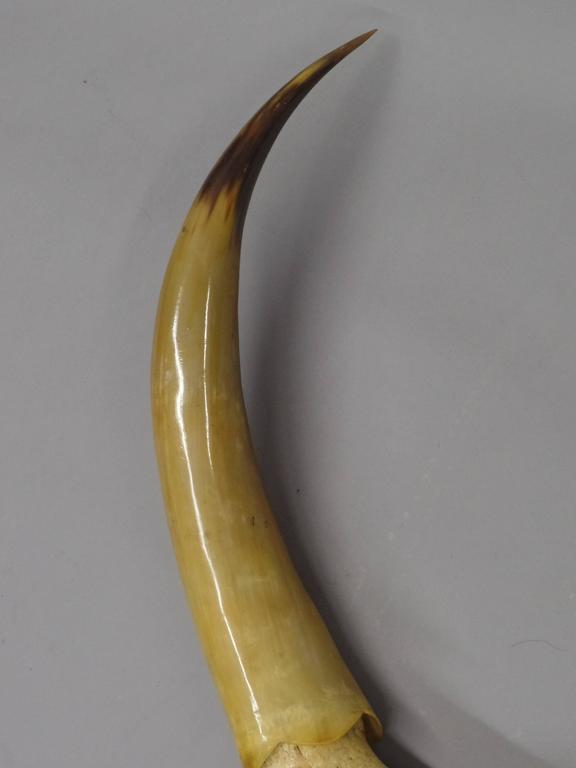 Argentine Large Dramatic Horn Sculpture For Sale
