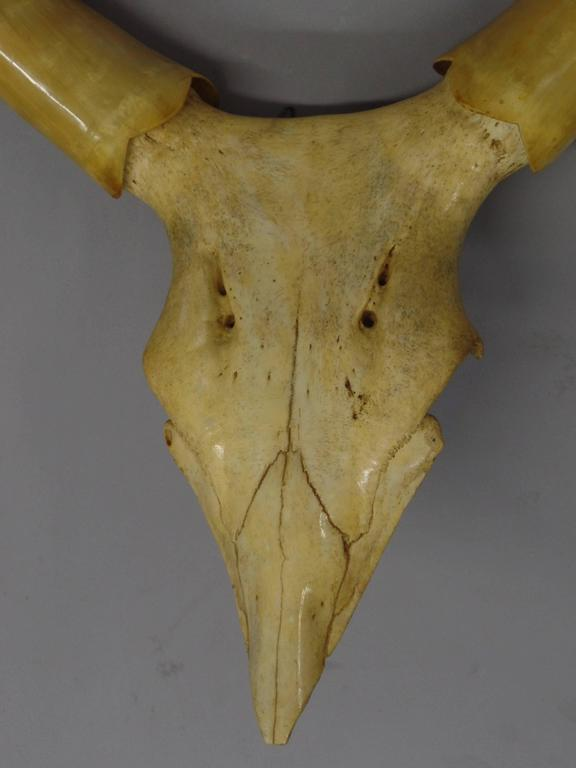 Mid-Century Modern Large Dramatic Horn Sculpture For Sale