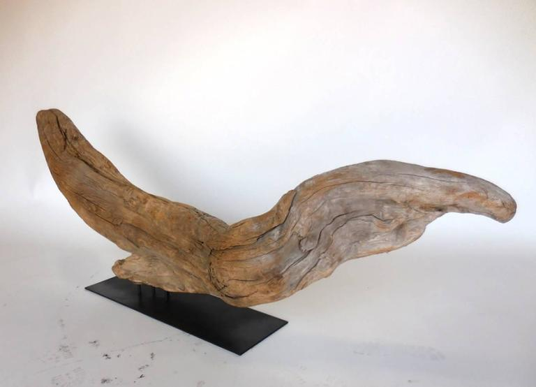 Organic Modern Driftwood Sculpture For Sale