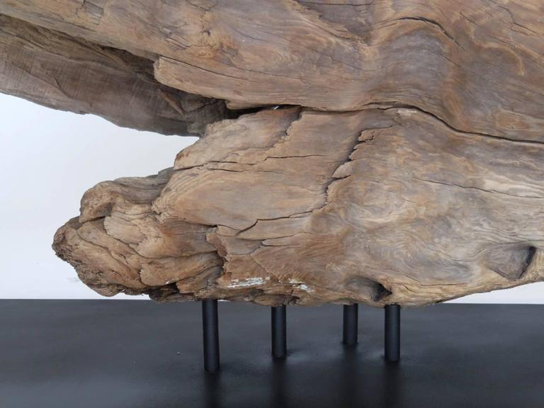 20th Century Driftwood Sculpture For Sale