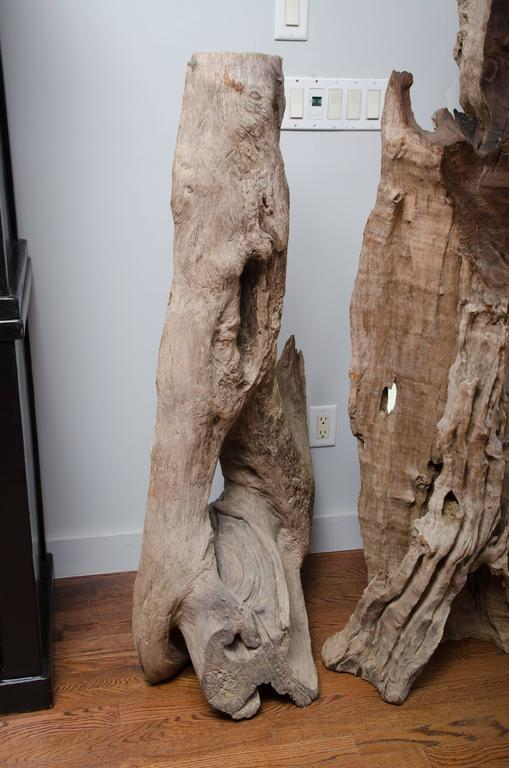 Thai River Bed Petrified Tree Root from Chang Mai 4