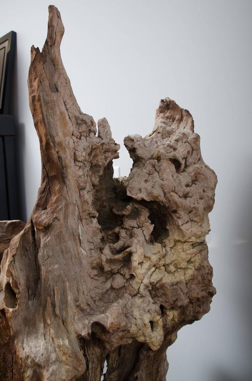 Thai River Bed Petrified Tree Root from Chang Mai 2