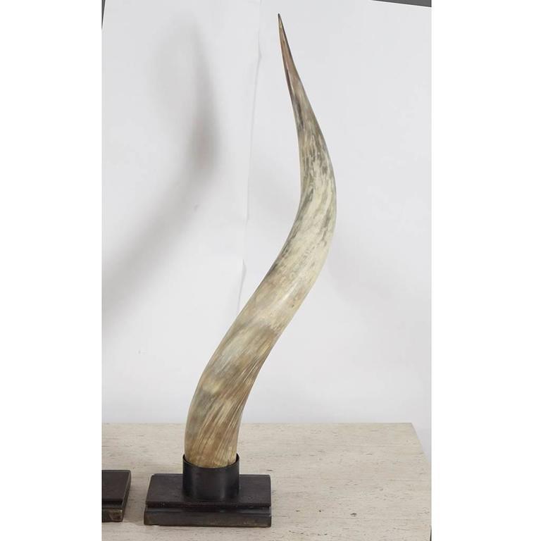 Organic Modern Steer Horns on Metal Stands For Sale