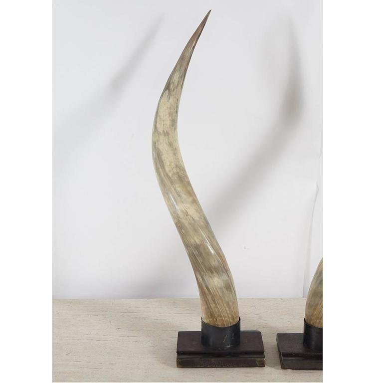 American Steer Horns on Metal Stands For Sale