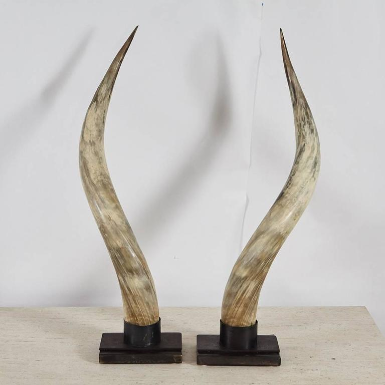 Steer Horns on Metal Stands In Excellent Condition For Sale In Culver City, CA