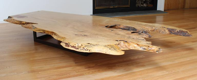 A Unique And Impressive, Natural Edge Spalted Maple Coffee Table On Cold  Rolled Steel Base