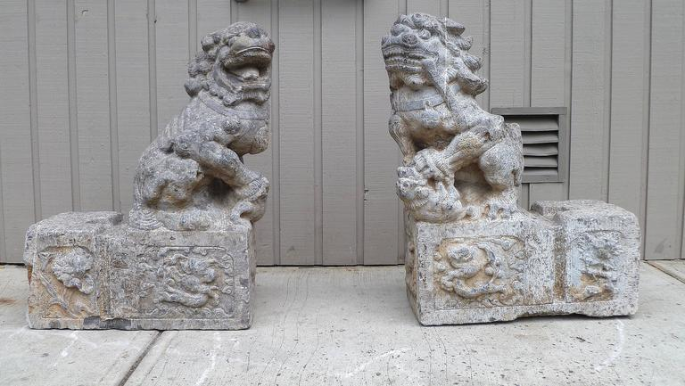 Pair of grey stone carved foo lions with good detail through out sit on top of detail base of dragons, rabbit and floral motif. Provenance: Acquired from Brunk Auctions.