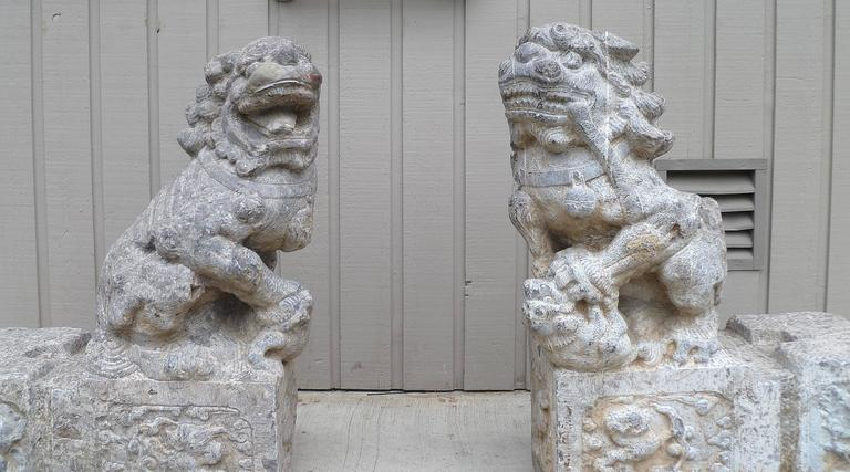 Ming Pair of Grey Stone Carved Foo Lions For Sale