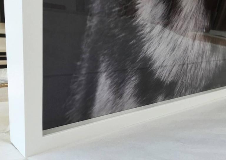 Siberian Husky Print 2