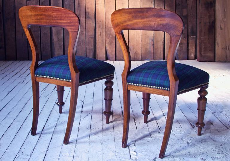 William IV Set of 8 'Balloon' Chairs in Cuban Mahogany and Blue Plaid Wool 1830s In Good Condition In Brooklyn, NY