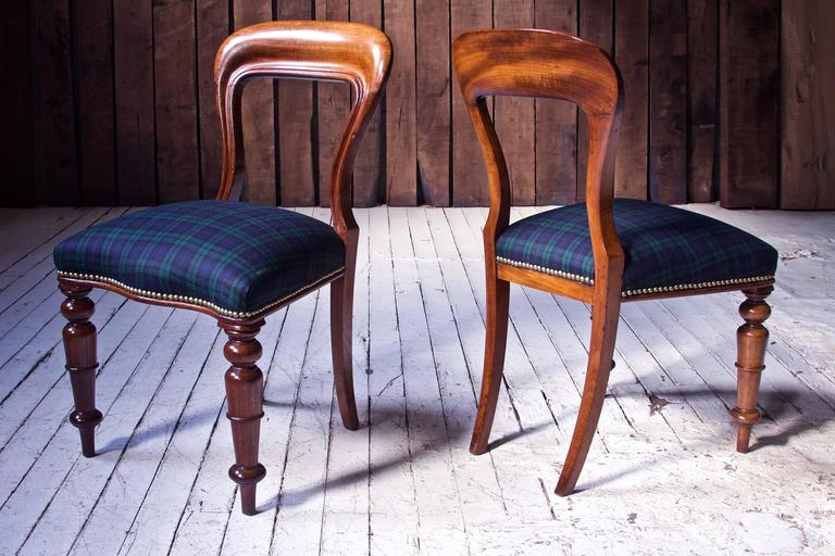 Irish William IV Set of 8 'Balloon' Chairs in Cuban Mahogany and Blue Plaid Wool 1830s