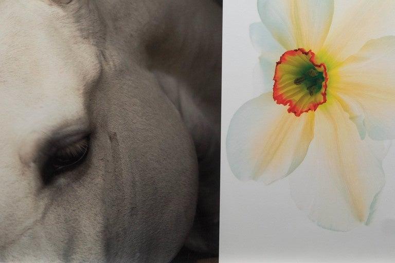 "Christopher Makos/Paul Solberg ""Horse & Flower"" Photograph Series 2"