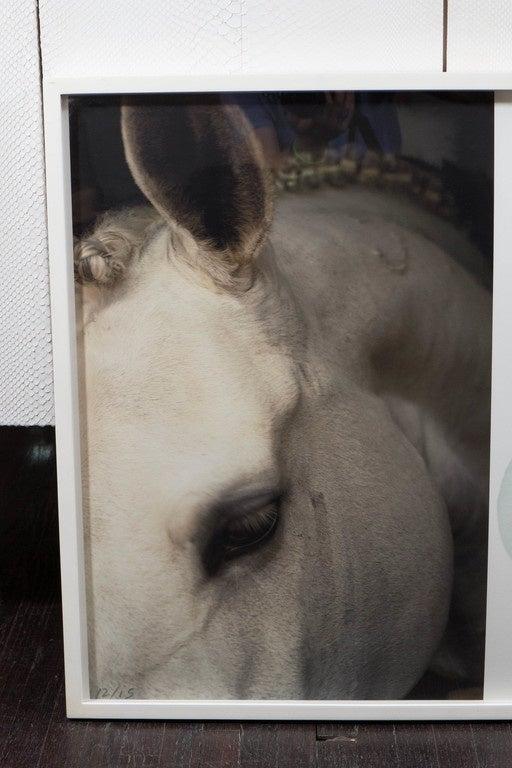 "Christopher Makos/Paul Solberg ""Horse & Flower"" Photograph Series 3"