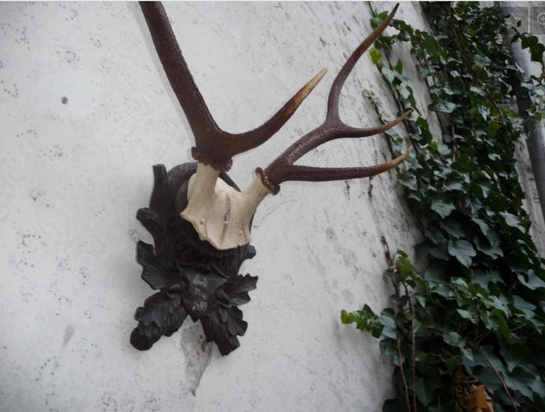 Stately Black Forest antler mount on carved walnut plaque.
