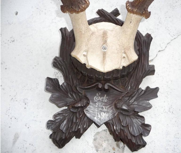 Austrian Stately Black Forest Antler Mount on Carved Walnut Plaque For Sale