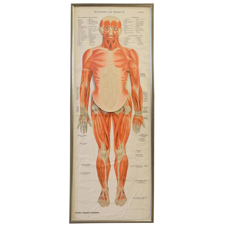 Extremely Rare 19th Century Articulated Anatomy Chart at 1stdibs