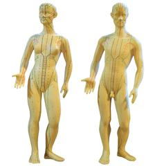 Set of Male and Female Acupuncture Models