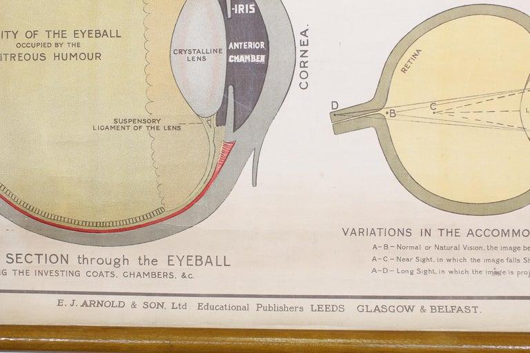 20th Century Antique Chart