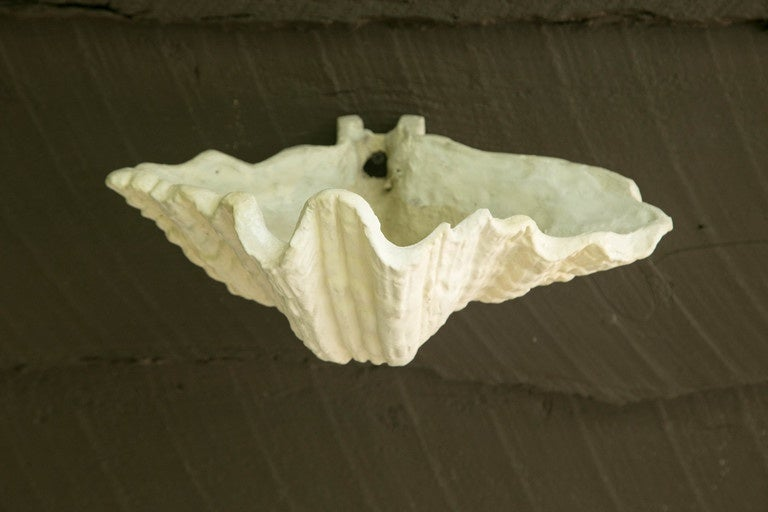 Pair of Plaster Shell Wall Sconces For Sale 2