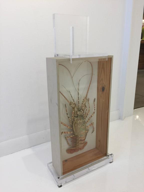 20th Century Tiger Lobster Taxidermy Encased in Box, Mounted on Custom Lucite Easel For Sale