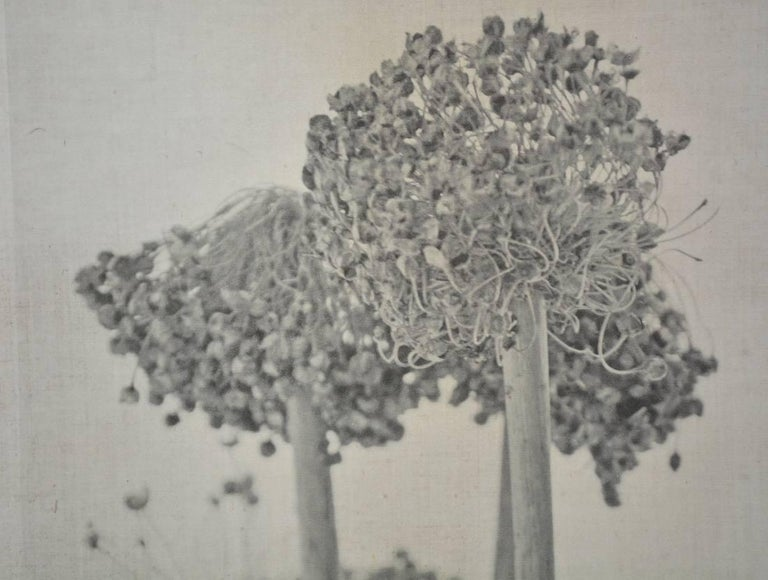 Caroline Kaars Sypesteyn of Berkshire Artisanal is the artist who has created this black-and-white photographic print on linen of onion heads. Titled