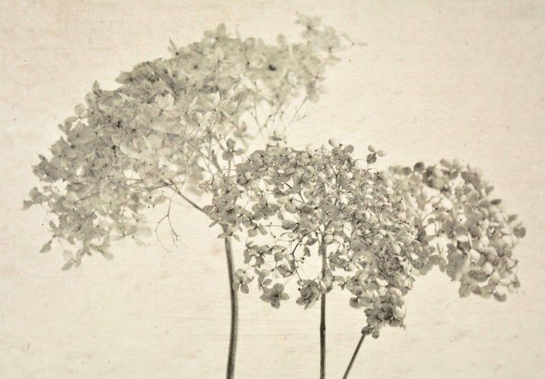 """Caroline Kaars Sypesteyn of Berkshire Artisanal is the artist who has created this black-and-white photographic print on linen of dried hydrangeas. Titled """"Hydrangeas #4"""". The photographic image is printed on linen saturated in plaster, then sand is"""