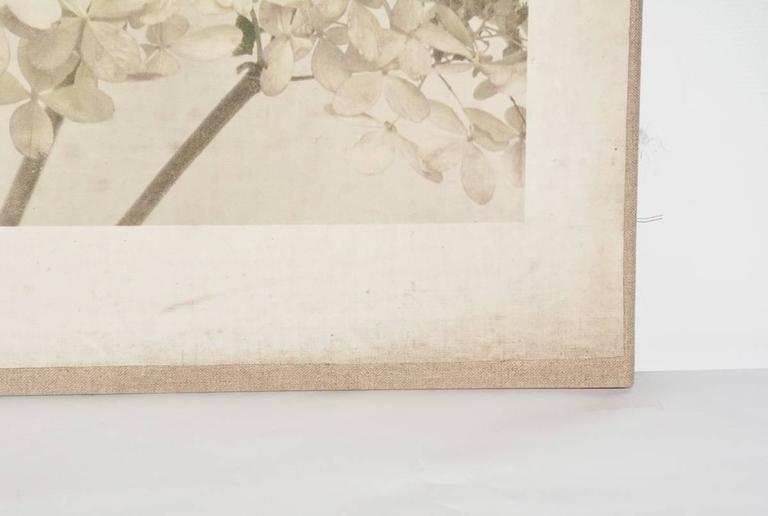 American Contemporary Photograph of Hydrangeas For Sale