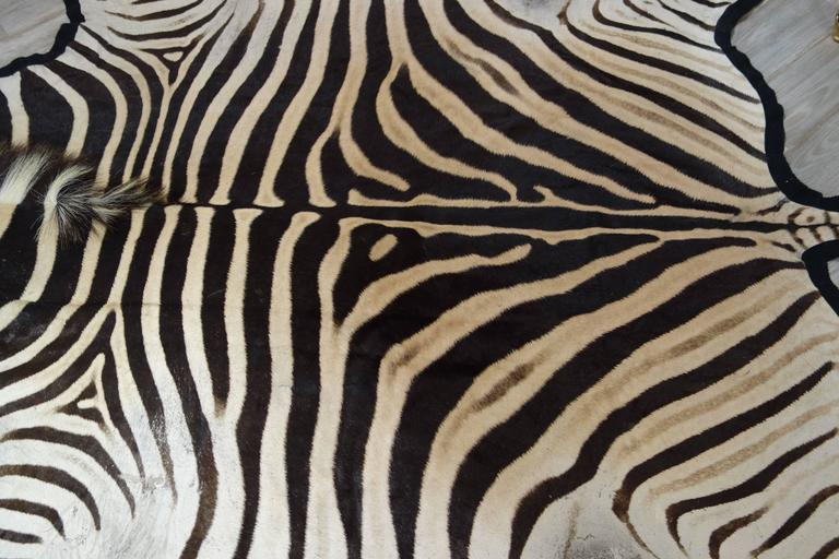 Large and Graphic New Burchell's Zebra Skin Hide in Black, Cream and Sand 2