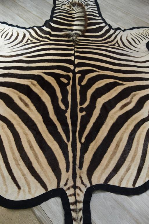 Large and Graphic New Burchell's Zebra Skin Hide in Black, Cream and Sand 5