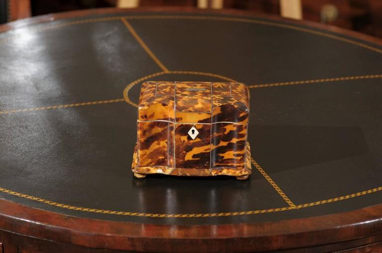 Tortoise Shell 19th Century English Regency Tortoiseshell Tea Caddy For Sale