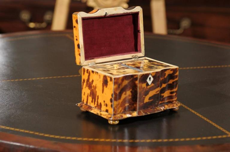 19th Century English Regency Tortoiseshell Tea Caddy For Sale 4