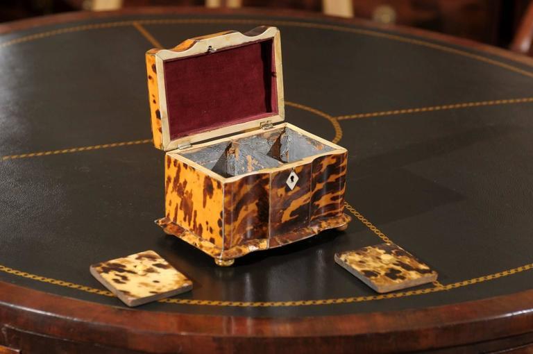 19th Century English Regency Tortoiseshell Tea Caddy For Sale 3