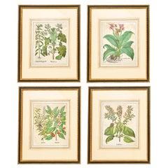 Set of Four Abraham Munting Botanical Prints, 18th Century