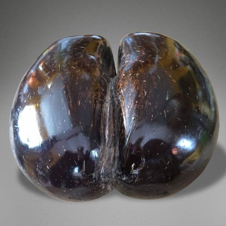 Particularly Fine Example of a Late 19th Century Polished Coco De Mer 2