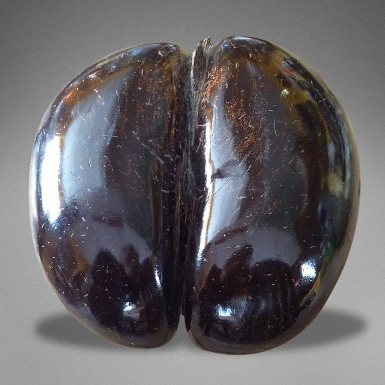 Particularly Fine Example of a Late 19th Century Polished Coco De Mer 3