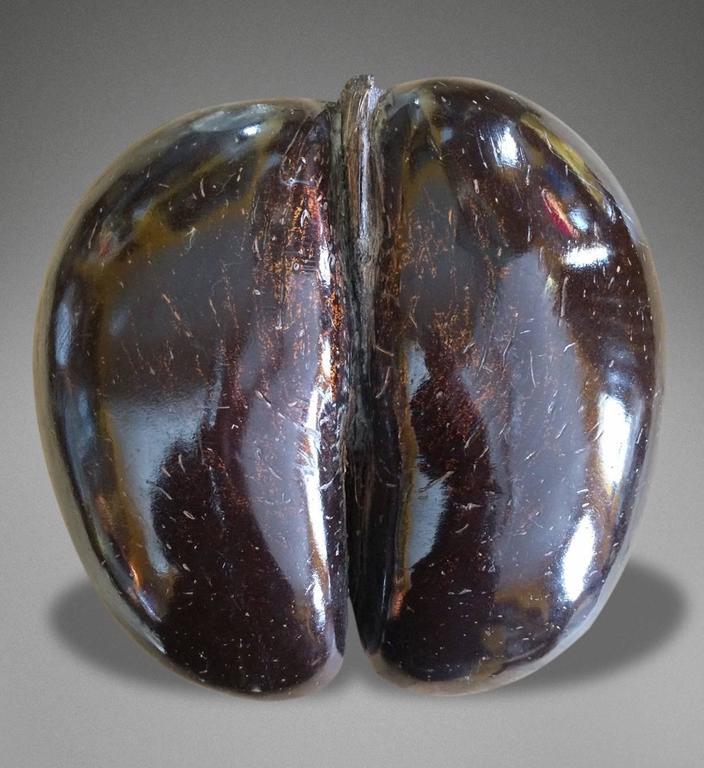 Particularly Fine Example of a Late 19th Century Polished Coco De Mer 4