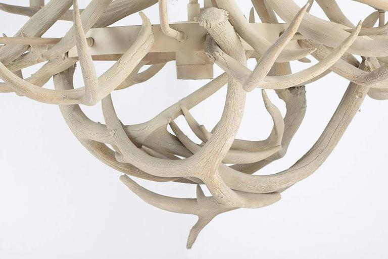 Organic Modern Diameter Eight Arm Deer Antler Chandelier