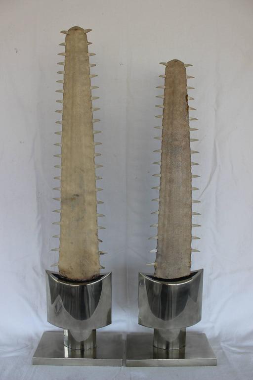 Pair of sawfish bills mounted on steel bases in the style Karl Springer.  Measures: 39 5/8