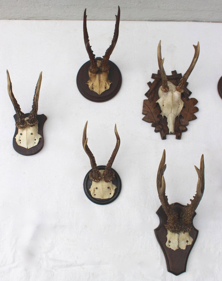 Set of Eight Antique Deer Trophies In Excellent Condition For Sale In Sag Harbor, NY