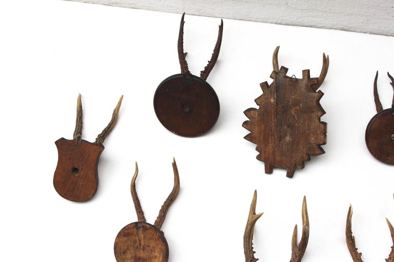 Set of Eight Antique Deer Trophies For Sale 1