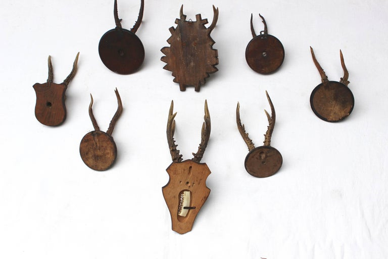 Set of Eight Antique Deer Trophies For Sale 2