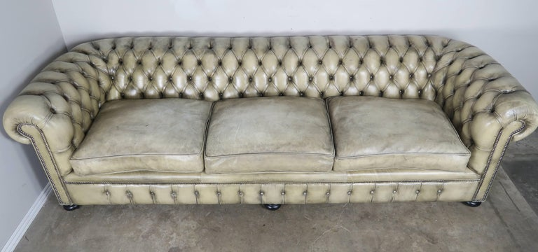 Tufted English Leather Chesterfield Sofa in perfectly worn leather, measure: 9' long. The leather has faded into a beautiful color and is in pristine condition. Tight back with three loose seat cushions. Nailhead trim detail throughout. The sofa
